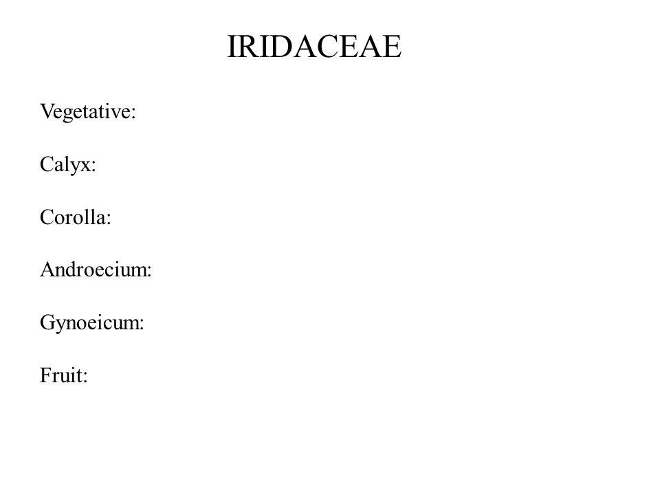 Vegetative: Calyx: Corolla: Androecium: Gynoeicum: Fruit: IRIDACEAE