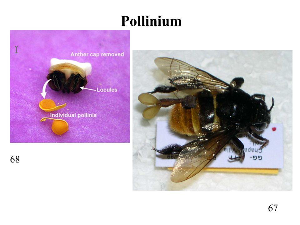 67 68 Pollinium