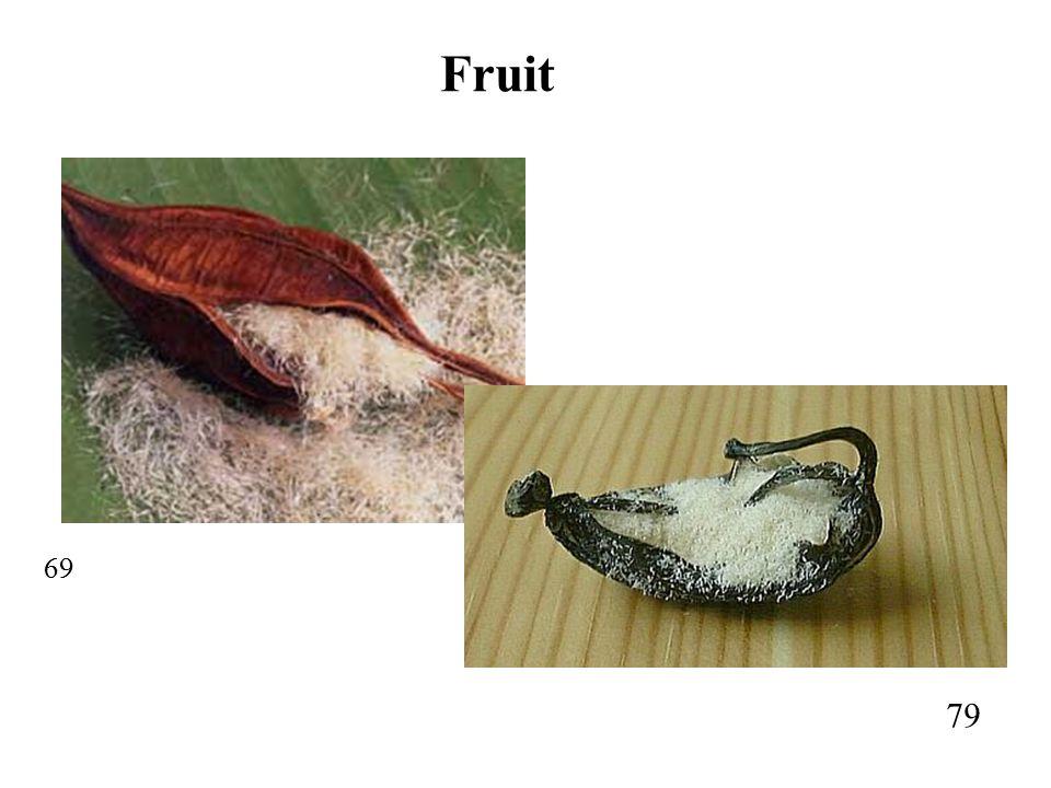 69 79 Fruit
