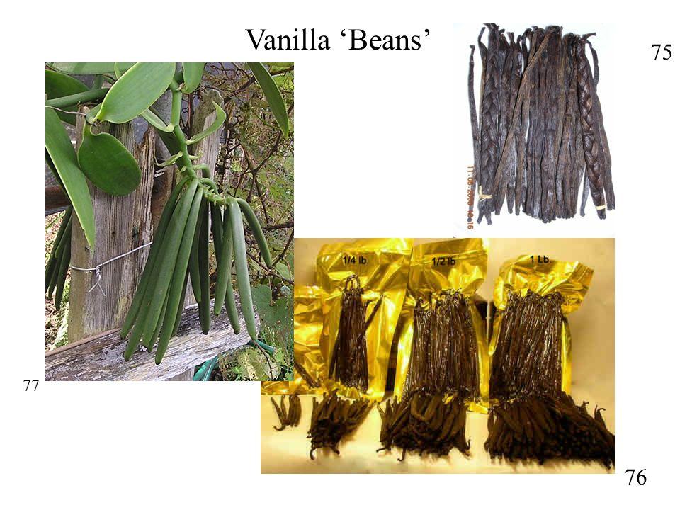 75 76 Vanilla 'Beans' 77