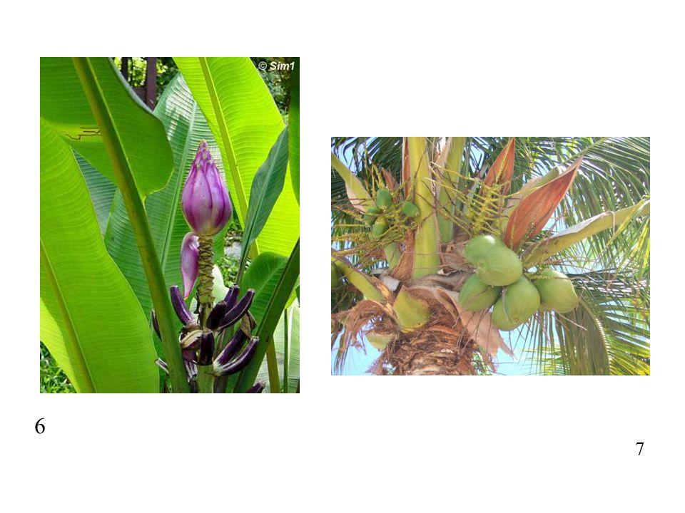 51 http://www.chesterkiwanis.com/files/public/rhizome.jpg 52 http://www.ubcbotanicalgarden.org/potd/cypripedium_reginae.jpg 53 http://www.nature-diary.co.uk/nn-images/0406/040625-platanthera- chlorantha-2.jpg 54 http://natureproducts.net/Wholesale/Vanilla_flower.jpg 55 http://www.fs.fed.us/wildflowers/regions/pacificsouthwest/MeeksBay/ images/platanthera_leucostachys_lg.jpg 56 http://www.moblog.com.sg/blog/chor/img/50884584-5B7E-4DD1-BDFC- 03658371541D/anotherhangingorchid.jpg 57 http://www.firstrays.com/Pictures/orchidaerialroot.gif 59 http://www.kfunigraz.ac.at/~katzer/pictures/vani_08.jpg 60 http://www.anu.edu.au/BoZo/orchid_pollination/images/Ctrap%2Bpoll3.jpg