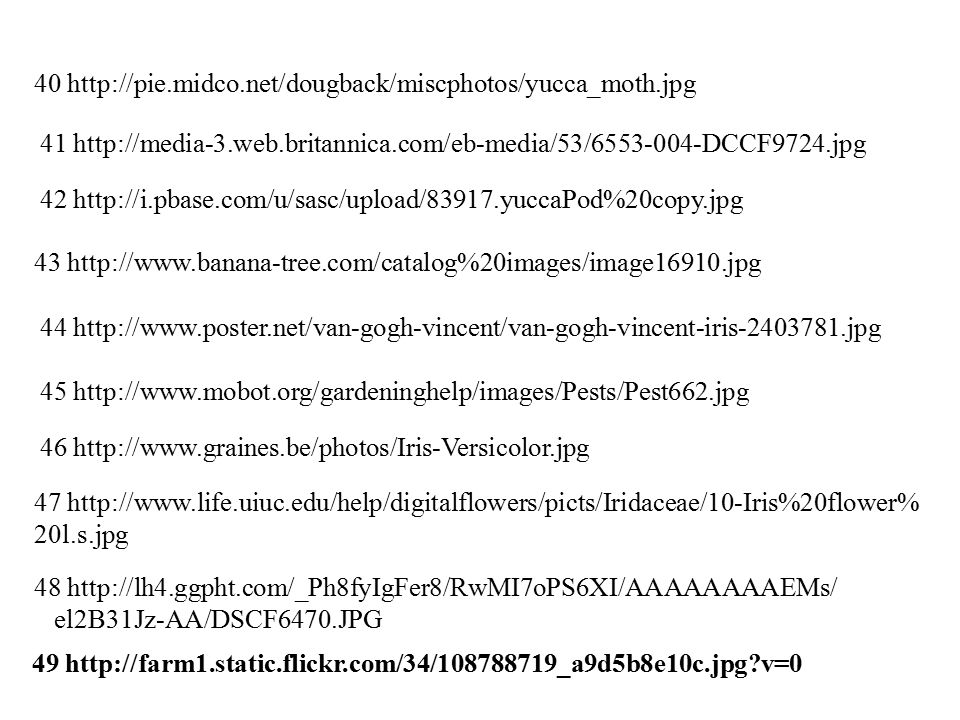 40 http://pie.midco.net/dougback/miscphotos/yucca_moth.jpg 41 http://media-3.web.britannica.com/eb-media/53/6553-004-DCCF9724.jpg 42 http://i.pbase.com/u/sasc/upload/83917.yuccaPod%20copy.jpg 43 http://www.banana-tree.com/catalog%20images/image16910.jpg 44 http://www.poster.net/van-gogh-vincent/van-gogh-vincent-iris-2403781.jpg 45 http://www.mobot.org/gardeninghelp/images/Pests/Pest662.jpg 46 http://www.graines.be/photos/Iris-Versicolor.jpg 47 http://www.life.uiuc.edu/help/digitalflowers/picts/Iridaceae/10-Iris%20flower% 20l.s.jpg 48 http://lh4.ggpht.com/_Ph8fyIgFer8/RwMI7oPS6XI/AAAAAAAAEMs/ el2B31Jz-AA/DSCF6470.JPG 49 http://farm1.static.flickr.com/34/108788719_a9d5b8e10c.jpg?v=0