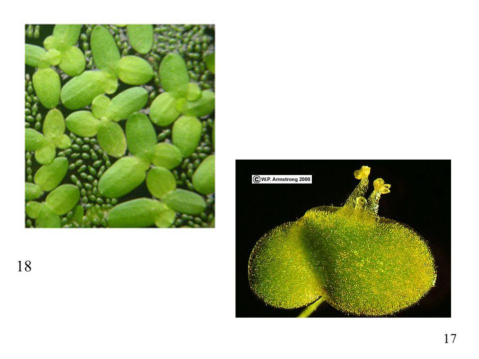71 72 Seeds; Mycorrhizae