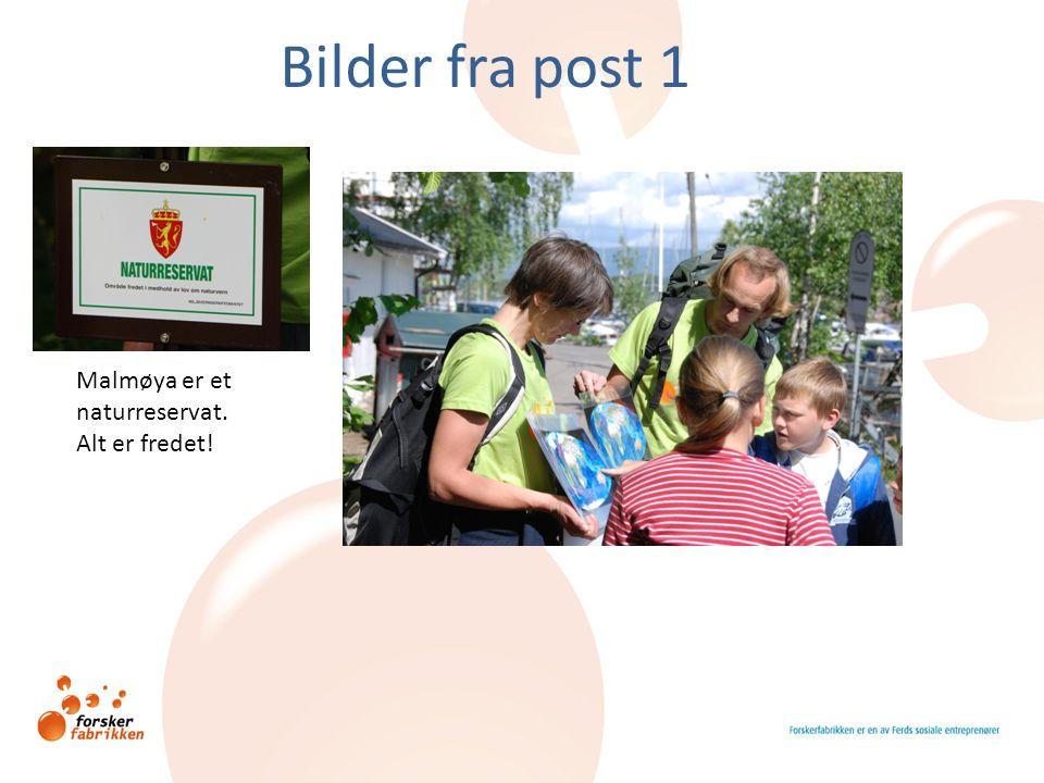 Bilder fra post 1 Malmøya er et naturreservat. Alt er fredet!