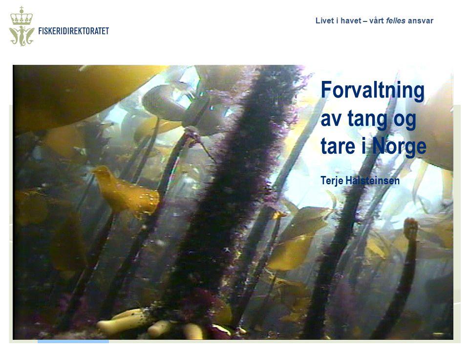 Livet i havet – vårt felles ansvar Forvaltning av tang og tare i Norge Terje Halsteinsen