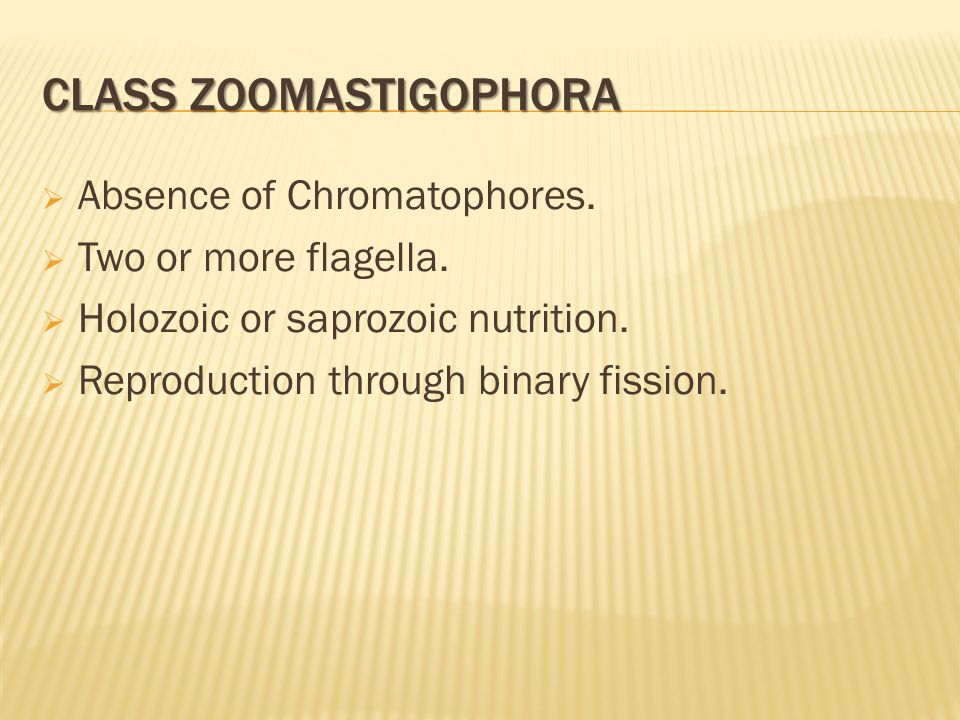 CLASS ZOOMASTIGOPHORA  Absence of Chromatophores.  Two or more flagella.  Holozoic or saprozoic nutrition.  Reproduction through binary fission.