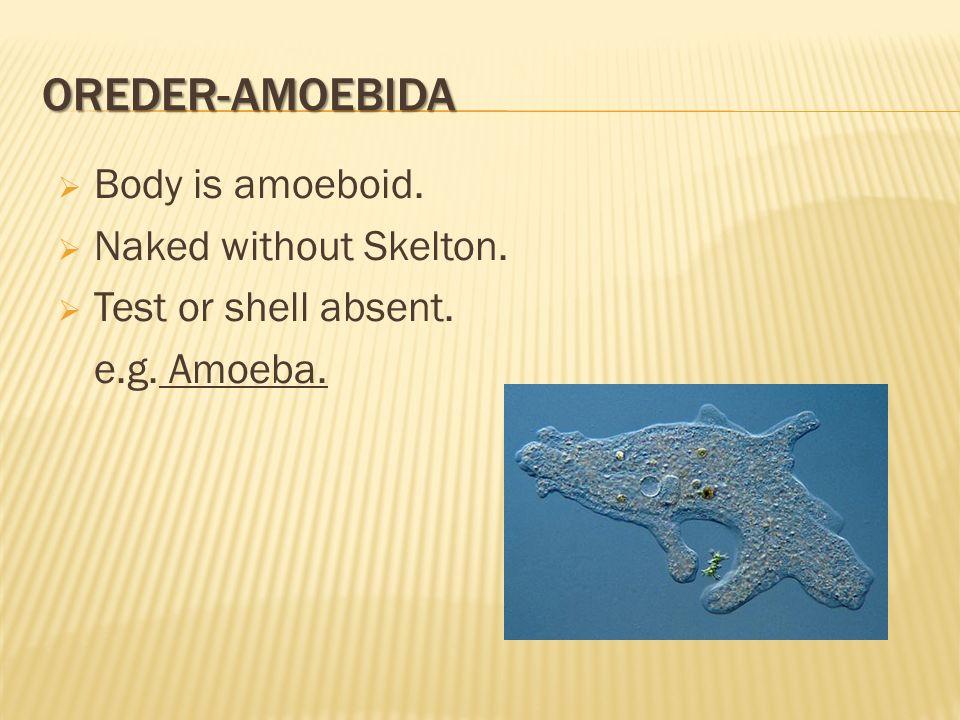 OREDER-AMOEBIDA  Body is amoeboid.  Naked without Skelton.  Test or shell absent. e.g. Amoeba.
