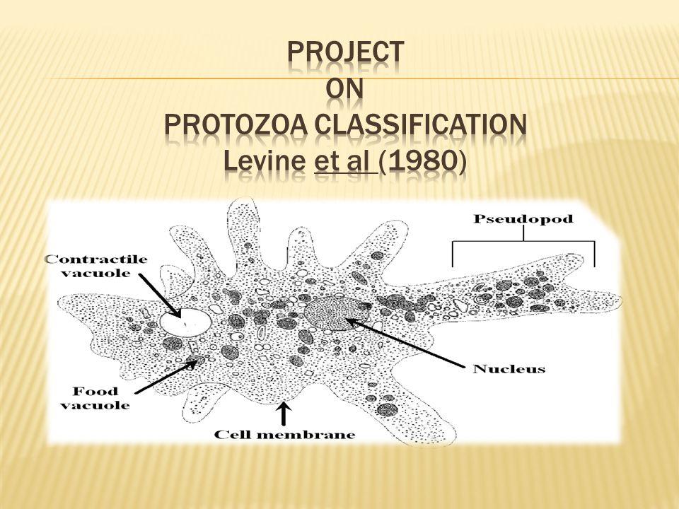  Protozoa classification (Levine et al (1980) ).  Life cycle of different protozoan parasites.