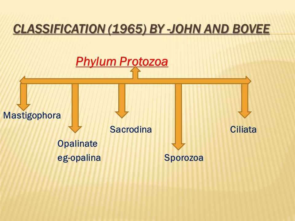 CLASSIFICATION (1965) BY -JOHN AND BOVEE Phylum Protozoa Mastigophora Sacrodina Ciliata Opalinate eg-opalina Sporozoa