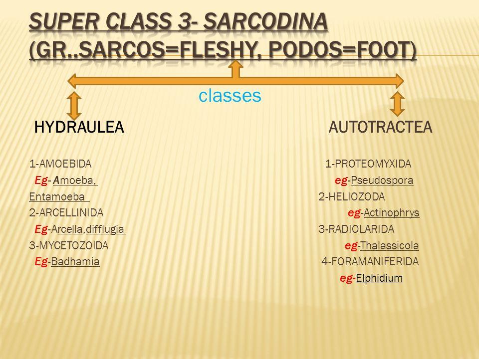 classes HYDRAULEA AUTOTRACTEA 1-AMOEBIDA 1-PROTEOMYXIDA Eg- Amoeba, eg-Pseudospora Entamoeba 2-HELIOZODA 2-ARCELLINIDA eg-Actinophrys Eg-Arcella,diffl