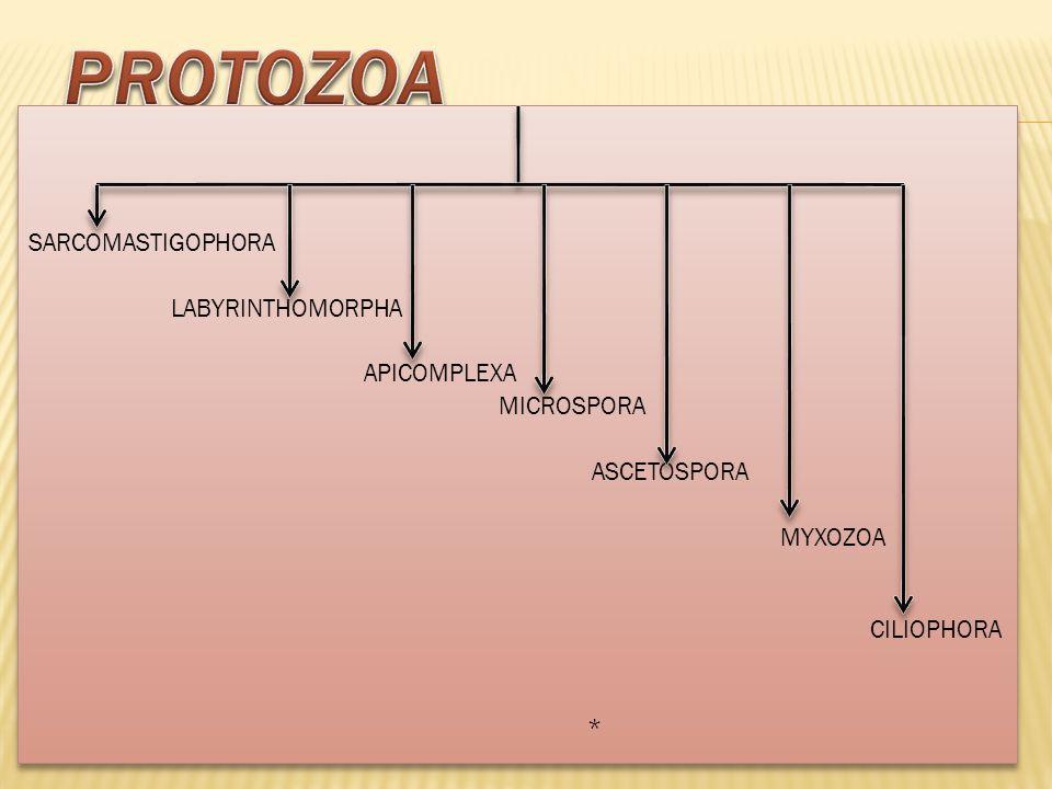 1- SARCOMASTIGOPHORA 2- APICOMPLEXA 3- MICROSPHORA NOT 4- ASCETOSPORA CONSIDERED 5- MYXOZOA 6- CILIOPHORA ( e.g-Balantidium, Nyctotherus)