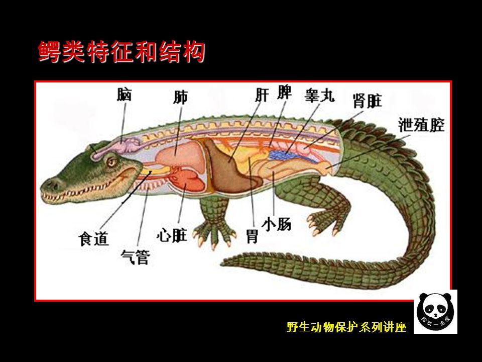 野生动物保护系列讲座 鳄类特征和结构