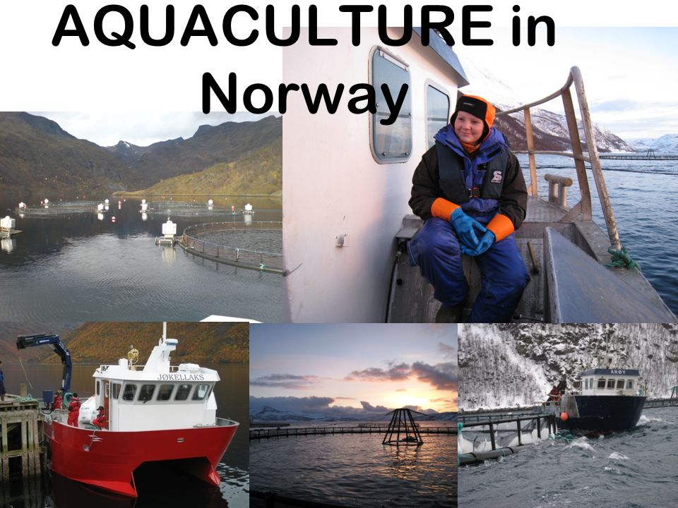 SEAFOOD The largest seafood suppliers, wild catch and aquaculture - quantity (FAO, 2006)
