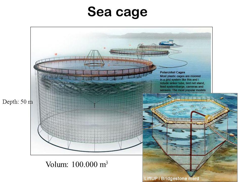 Sea cage Depth: 50 m Volum: 100.000 m 3