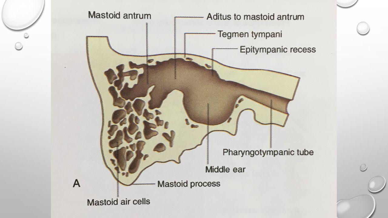 Anterior wall Auditory tube Tensor tympani's canal Caroticotym panic nerve Chorda tympanic nerve Lesser petrosal nerve Cochlearif orm process
