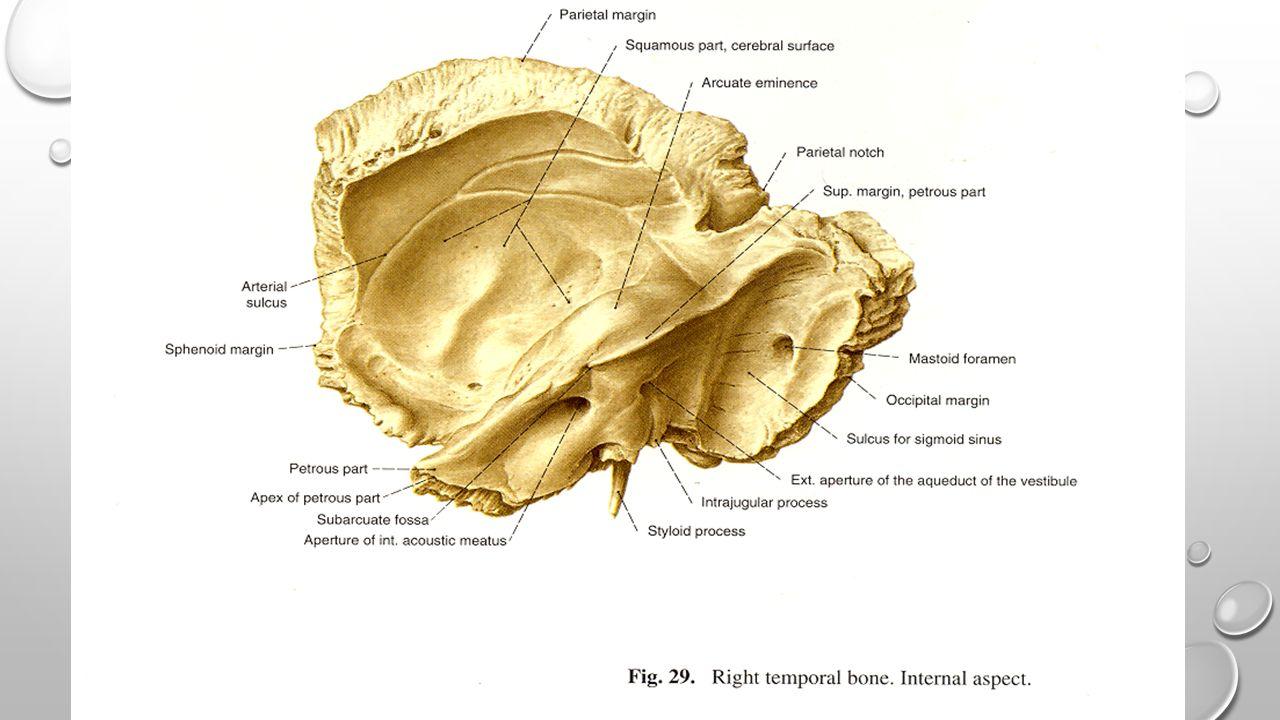 Ear Auris Externa Auria Media Auris internalis