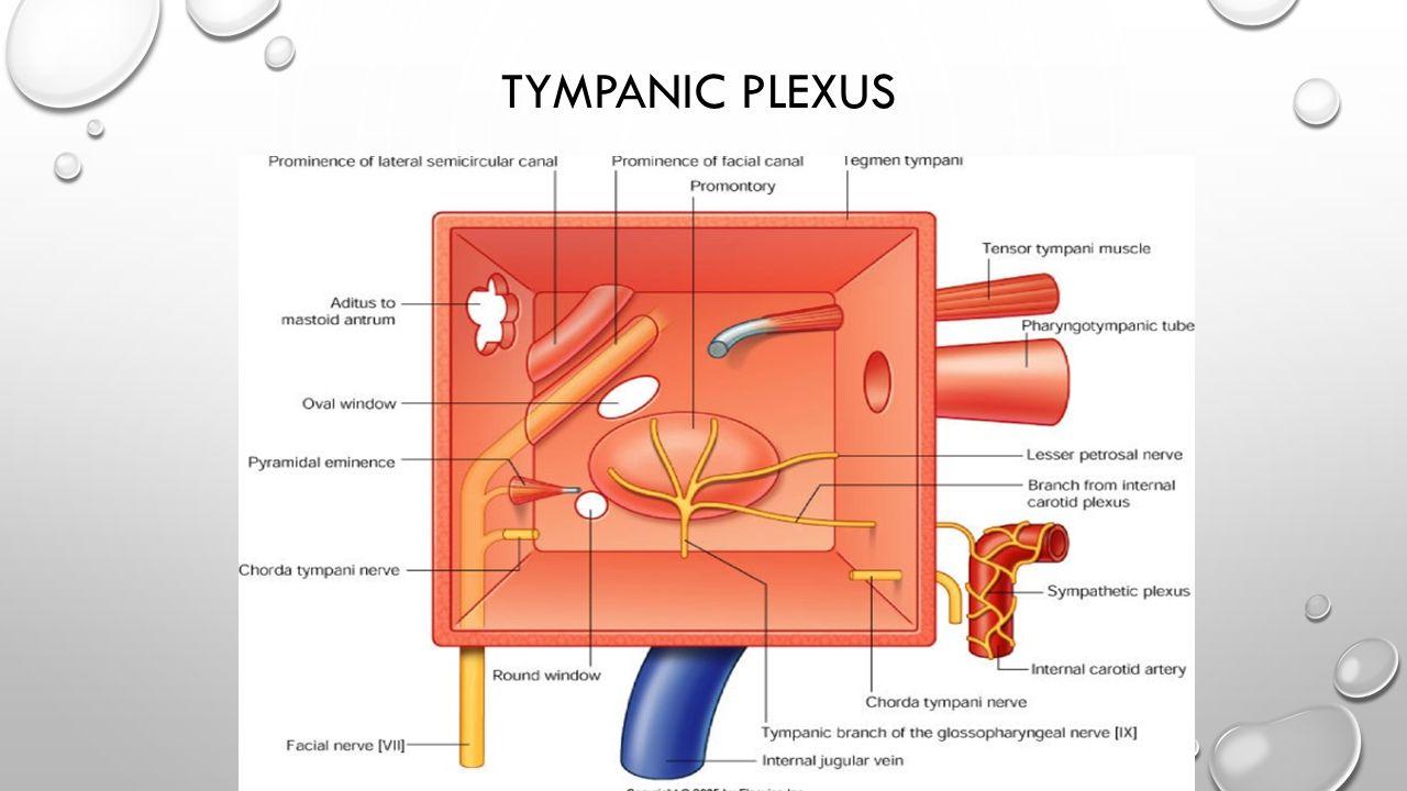 TYMPANIC PLEXUS