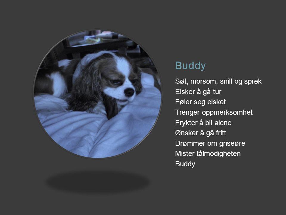 Buddy Søt, morsom, snill og sprek Elsker å gå tur Føler seg elsket Trenger oppmerksomhet Frykter å bli alene Ønsker å gå fritt Drømmer om griseøre Mis