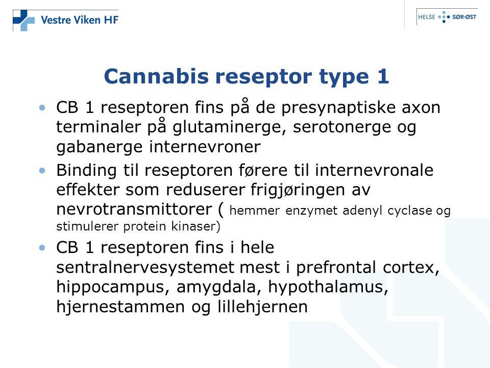 Cannabis reseptor type 1 CB 1 reseptoren fins på de presynaptiske axon terminaler på glutaminerge, serotonerge og gabanerge internevroner Binding til reseptoren førere til internevronale effekter som reduserer frigjøringen av nevrotransmittorer ( hemmer enzymet adenyl cyclase og stimulerer protein kinaser) CB 1 reseptoren fins i hele sentralnervesystemet mest i prefrontal cortex, hippocampus, amygdala, hypothalamus, hjernestammen og lillehjernen