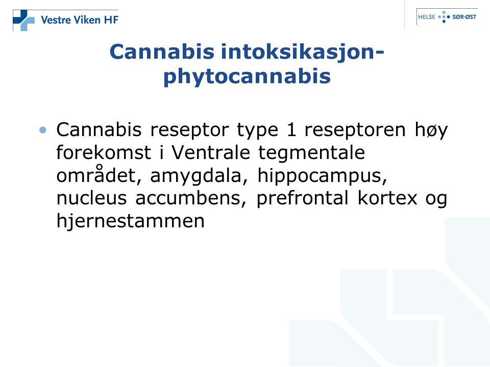 Cannabis intoksikasjon- phytocannabis Cannabis reseptor type 1 reseptoren høy forekomst i Ventrale tegmentale området, amygdala, hippocampus, nucleus accumbens, prefrontal kortex og hjernestammen