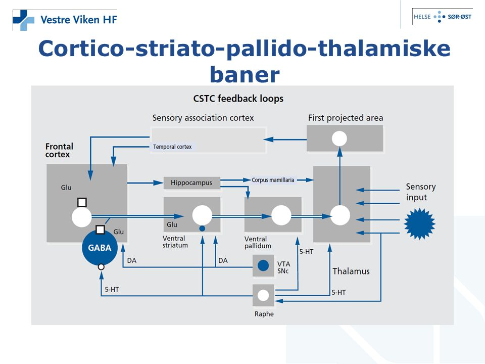 Cortico-striato-pallido-thalamiske baner