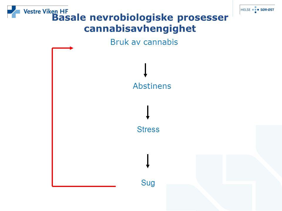 Basale nevrobiologiske prosesser cannabisavhengighet Bruk av cannabis Abstinens Stress Sug