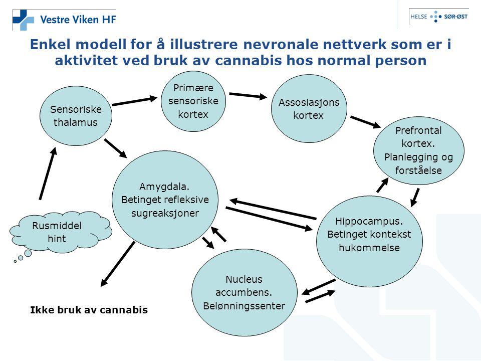 Enkel modell for å illustrere nevronale nettverk som er i aktivitet ved bruk av cannabis hos normal person Sensoriske thalamus Primære sensoriske kortex Assosiasjons kortex Prefrontal kortex.