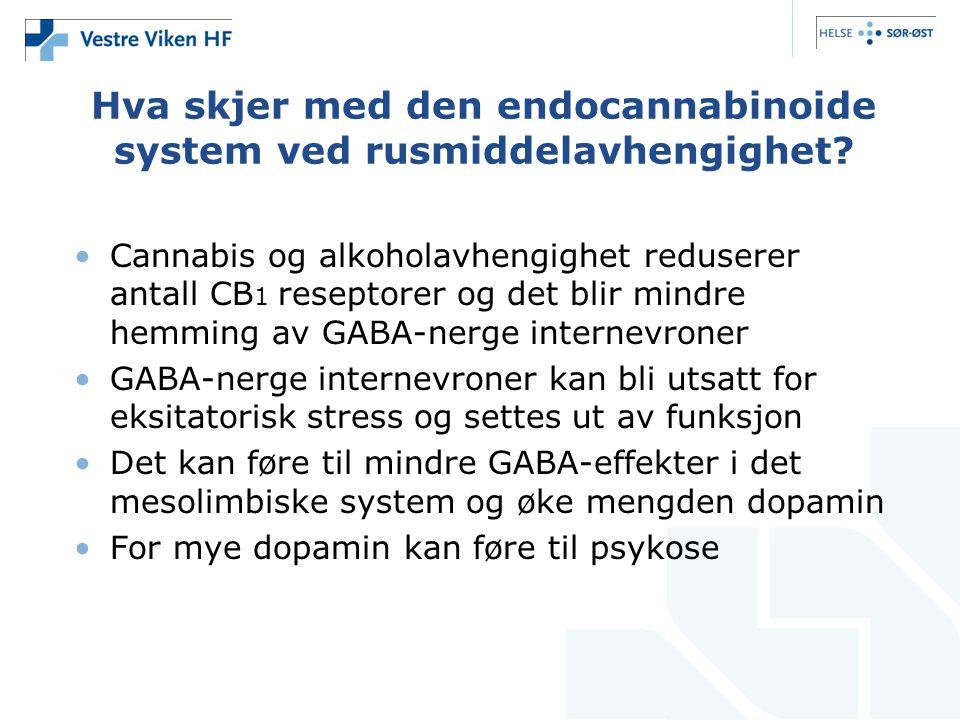 Hva skjer med den endocannabinoide system ved rusmiddelavhengighet.