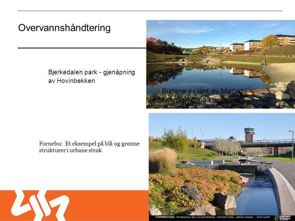 Fornebu: Et eksempel på blå og grønne strukturer i urbane strøk Overvannshåndtering Bildene er lånt av Målfrid Nyrnes i Oslo kommune Bjerkedalen park - gjenåpning av Hovinbekken