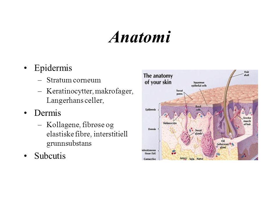 Anatomi Epidermis –Stratum corneum –Keratinocytter, makrofager, Langerhans celler, Dermis –Kollagene, fibrøse og elastiske fibre, interstitiell grunnsubstans Subcutis