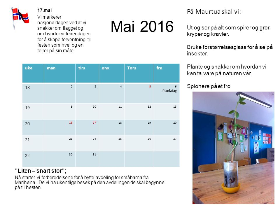 """Mai 2016 """"Liten – snart stor""""; Nå starter vi forberedelsene for å bytte avdeling for småbarna fra Marihøna. De vi ha ukentlige besøk på den avdelingen"""