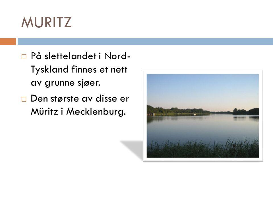 MURITZ  På slettelandet i Nord- Tyskland finnes et nett av grunne sjøer.