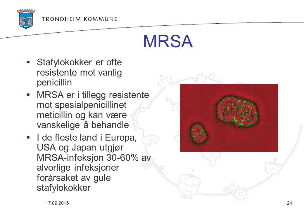 17.09.201624 MRSA Stafylokokker er ofte resistente mot vanlig penicillin MRSA er i tillegg resistente mot spesialpenicillinet meticillin og kan være v