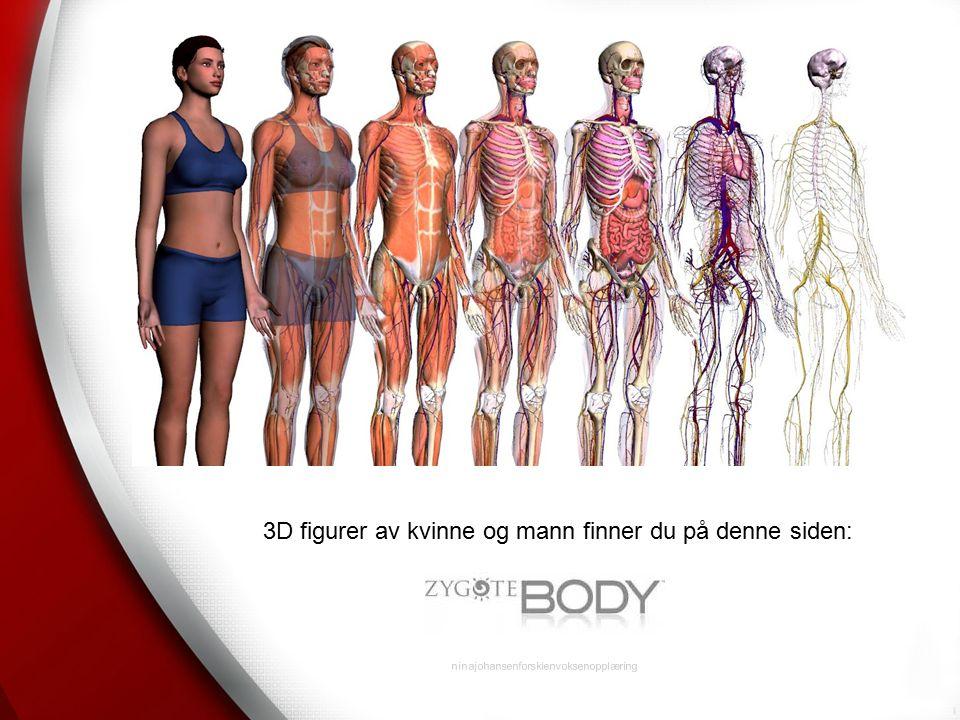 ninajohansenforskienvoksenopplæring 3D figurer av kvinne og mann finner du på denne siden: