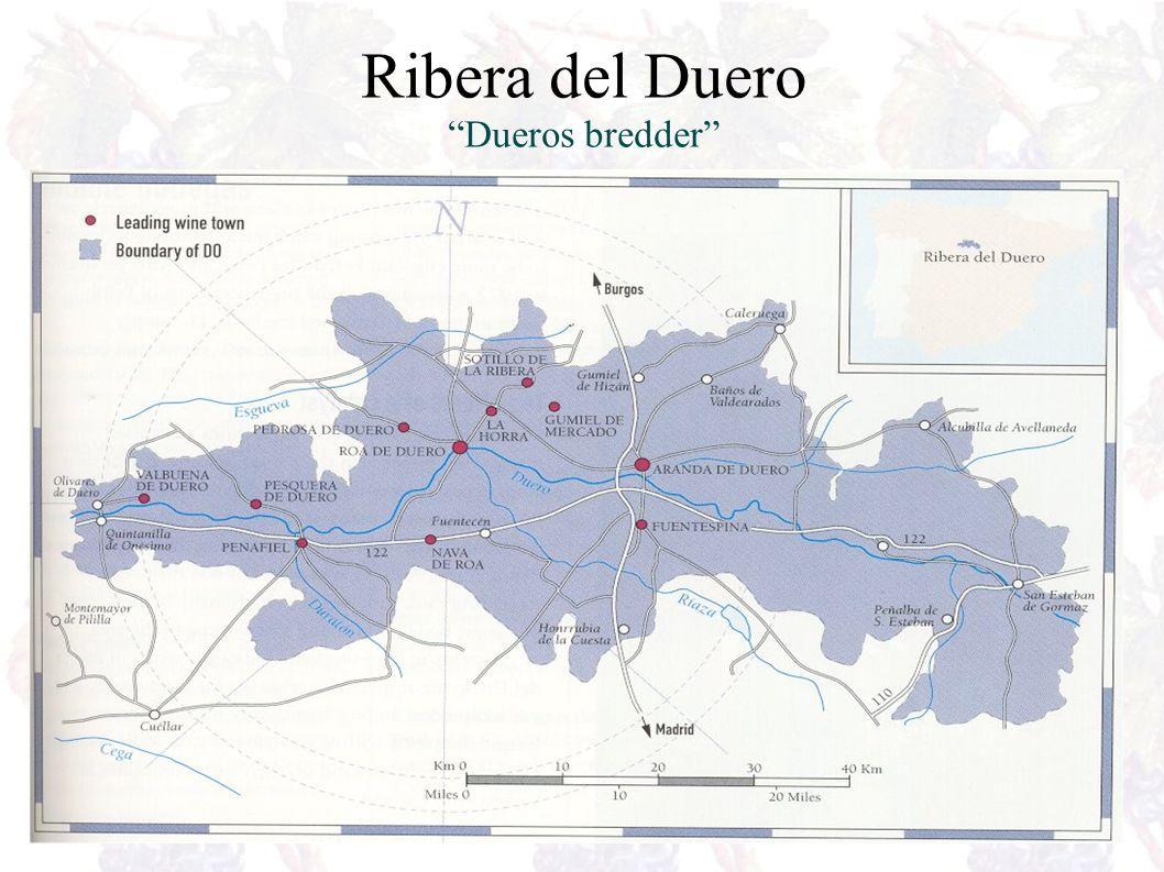 Rueda Ble egen DO i 1980 og er den mest kjente DO, etter Ribera del Duero Lange vinkjellere rundt byen, helt tilbake til 1300 tallet – det er her vinen tradisjonelt blir laget og lagret.