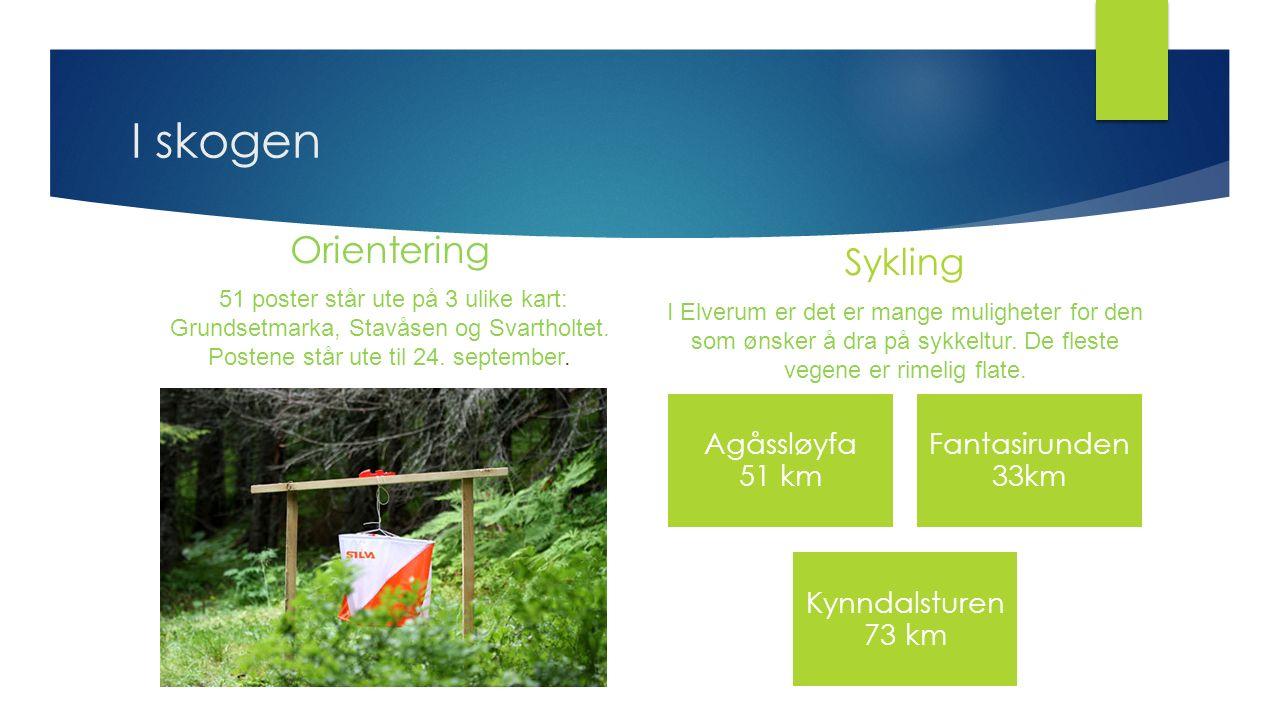 I skogen Orientering 51 poster står ute på 3 ulike kart: Grundsetmarka, Stavåsen og Svartholtet. Postene står ute til 24. september. Sykling I Elverum