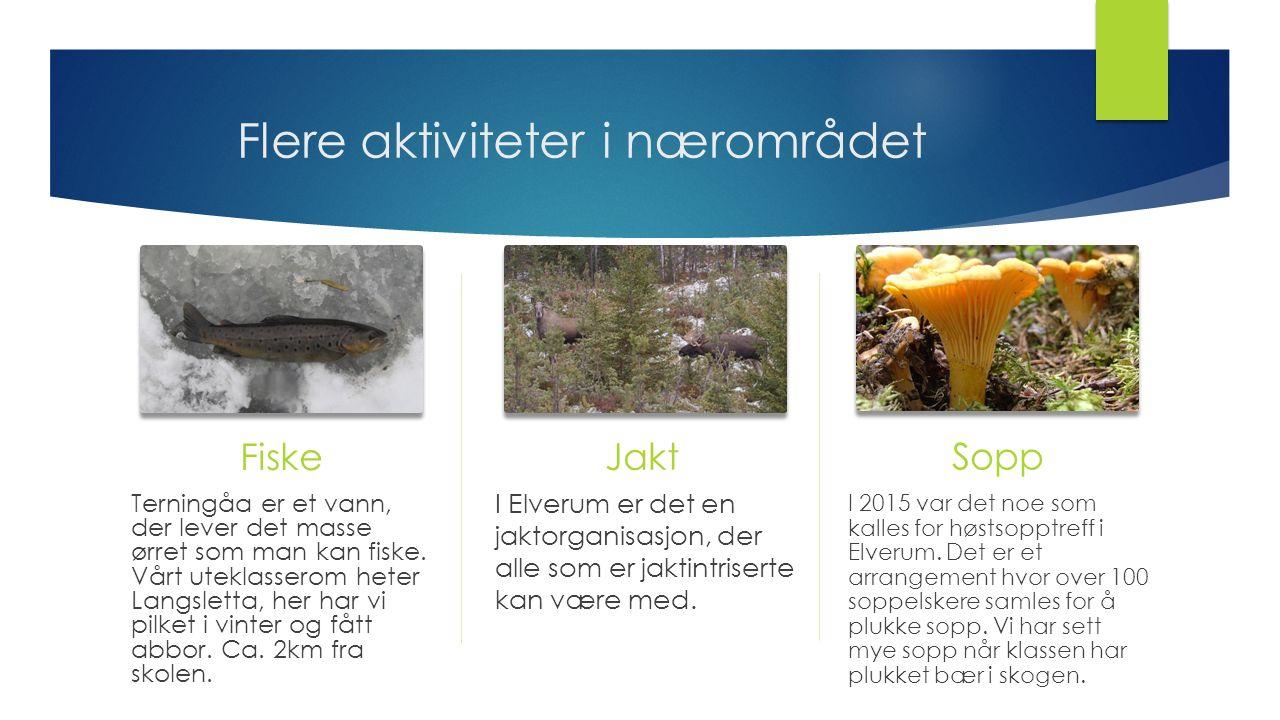 Flere aktiviteter i nærområdet Fiske Terningåa er et vann, der lever det masse ørret som man kan fiske. Vårt uteklasserom heter Langsletta, her har vi