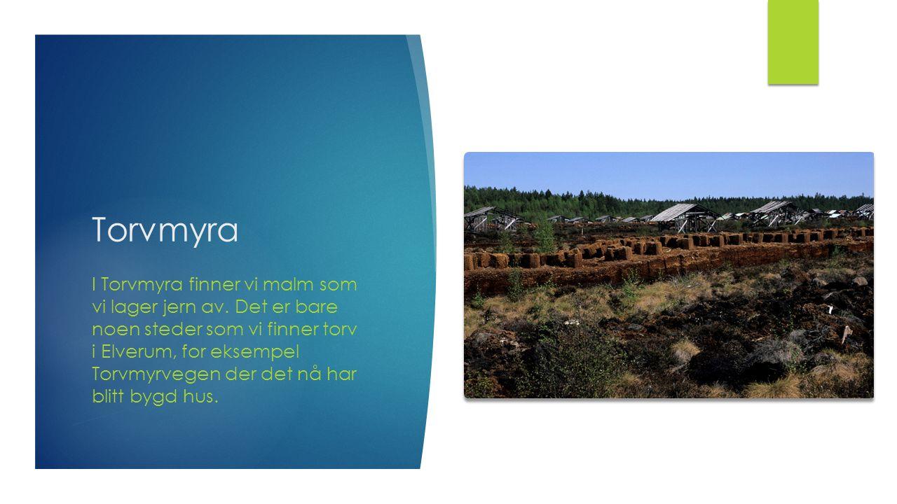 Torvmyra I Torvmyra finner vi malm som vi lager jern av. Det er bare noen steder som vi finner torv i Elverum, for eksempel Torvmyrvegen der det nå ha