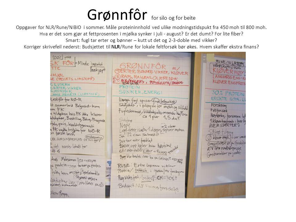 Grønnfôr for silo og for beite Oppgaver for NLR/Rune/NIBIO i sommer.