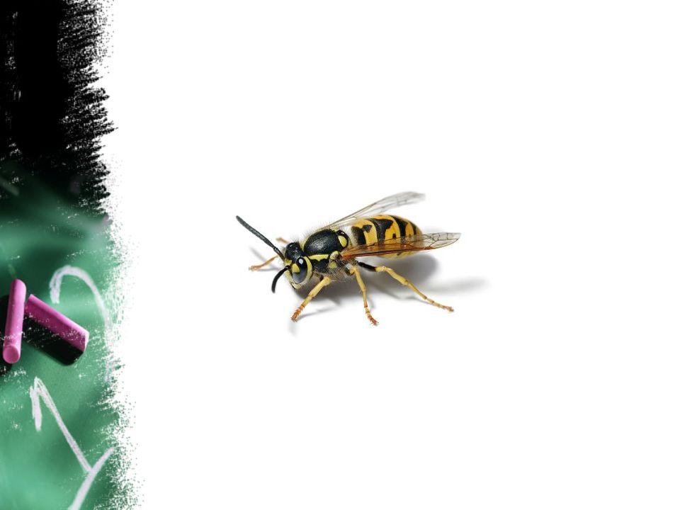 Slik diktet eigentleg er: Vepsen I stripet badedrakt og ør av dødsforakt flyr den med hevet spyd midt i sin egen lyd.