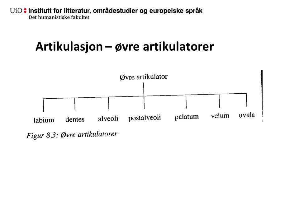 Artikulasjon – øvre artikulatorer