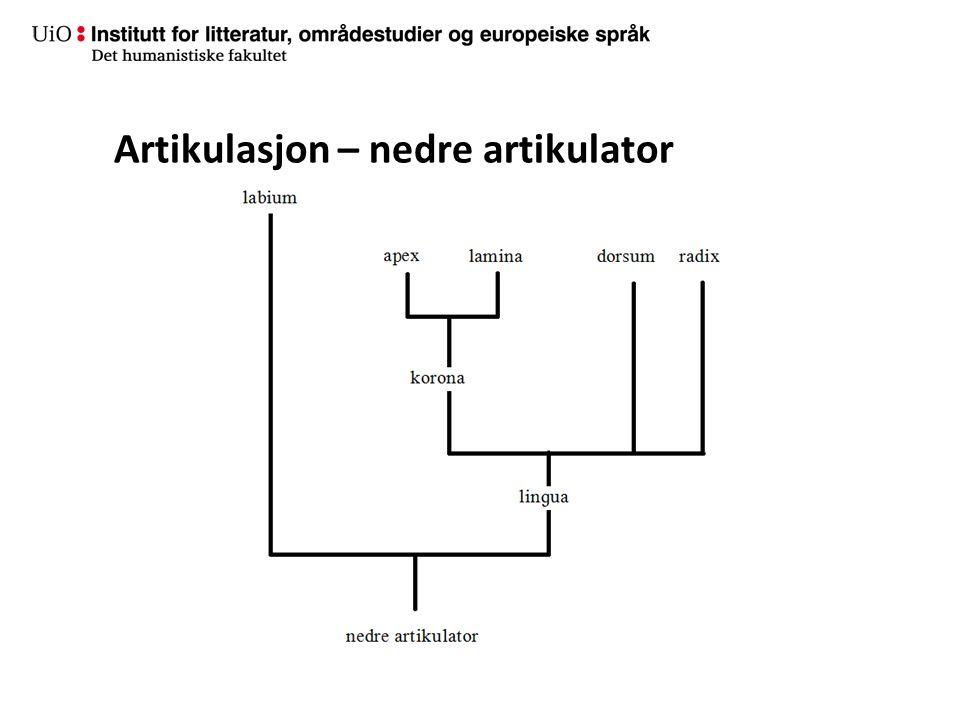 Artikulasjon – nedre artikulator