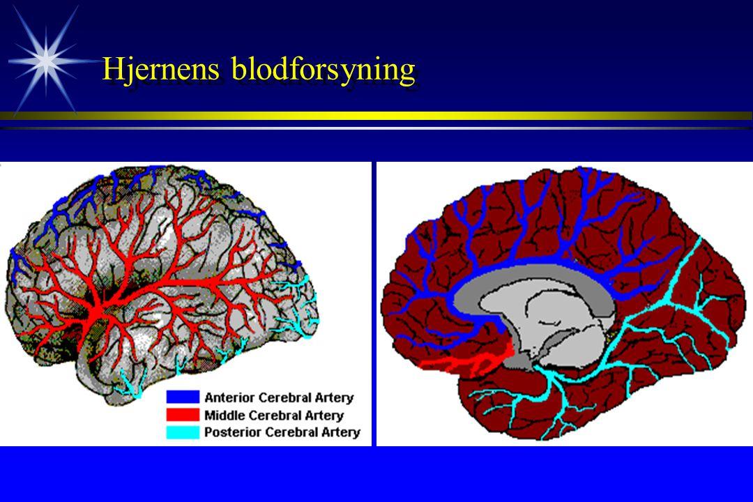 Hjernens blodforsyning