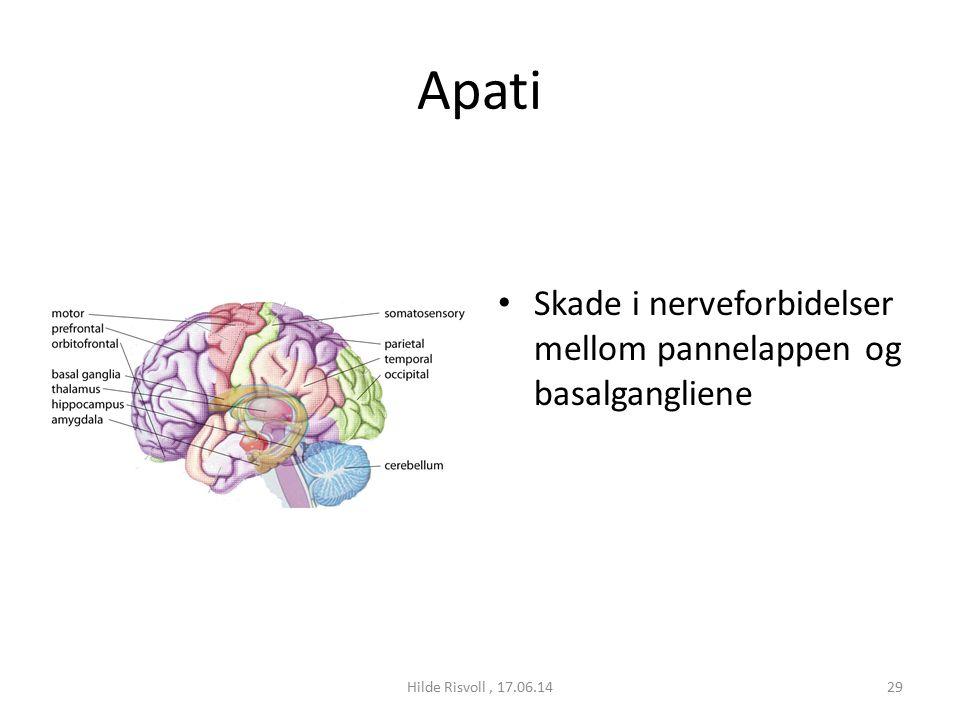 Apati Skade i nerveforbidelser mellom pannelappen og basalgangliene 29Hilde Risvoll, 17.06.14