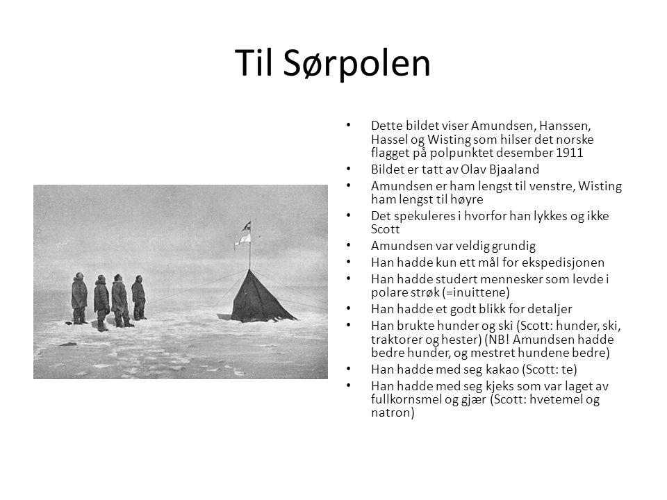 Til Sørpolen Dette bildet viser Amundsen, Hanssen, Hassel og Wisting som hilser det norske flagget på polpunktet desember 1911 Bildet er tatt av Olav