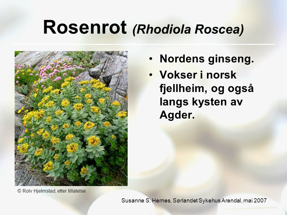 Susanne S. Hernes, Sørlandet Sykehus Arendal, mai 2007 Rosenrot (Rhodiola Roscea) Nordens ginseng.