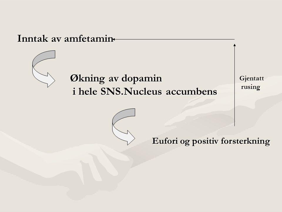 Inntak av amfetamin Økning av dopamin i hele SNS.Nucleus accumbens i hele SNS.Nucleus accumbens Eufori og positiv forsterkning Gjentatt rusing rusing