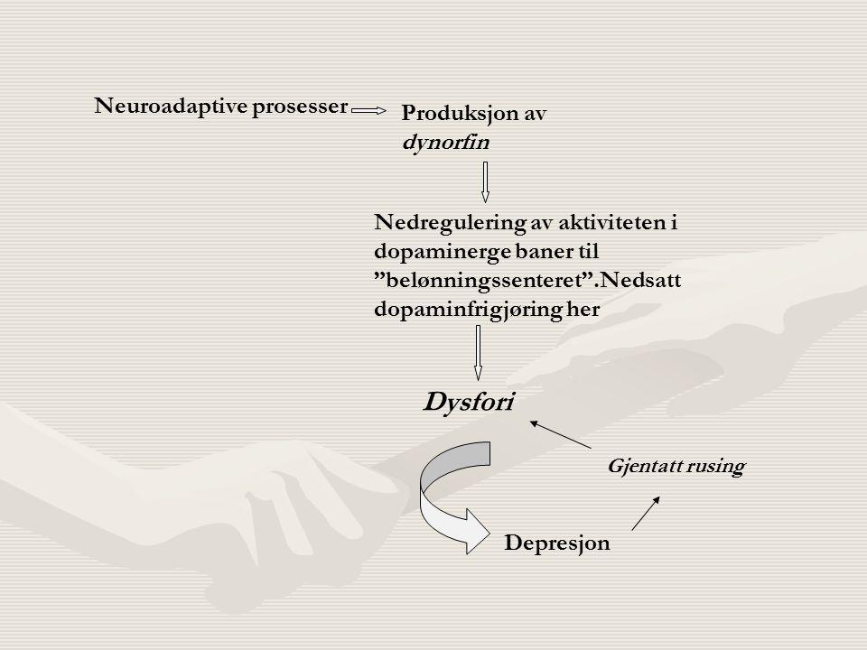 """Neuroadaptive prosesser Produksjon av dynorfin Nedregulering av aktiviteten i dopaminerge baner til """"belønningssenteret"""".Nedsatt dopaminfrigjøring her"""