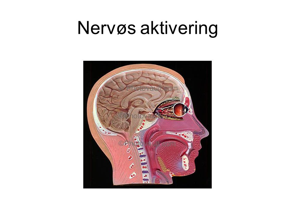Nervøs aktivering