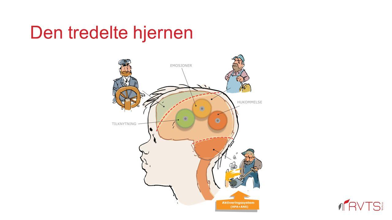 Den tredelte hjernen